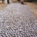 drying-fish-cambodia-web
