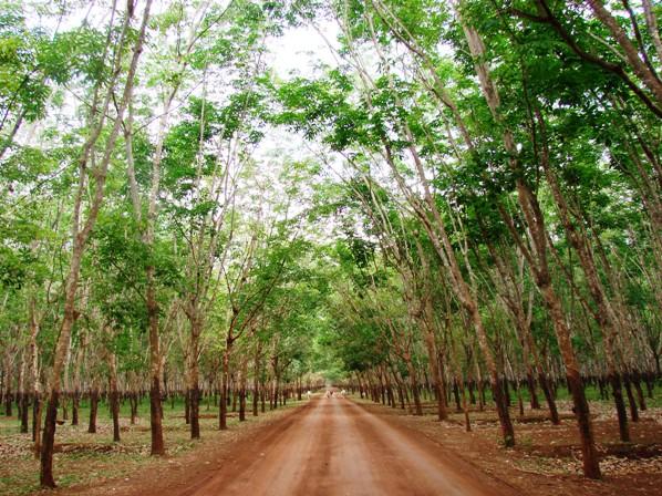 Travel: In Search of Lost Roads 4 – www khmer440 com