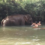 elephant in river